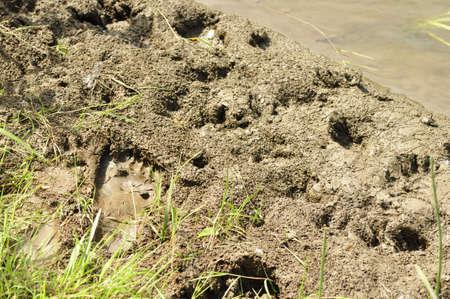 mud print: Footprint in the wet sand.