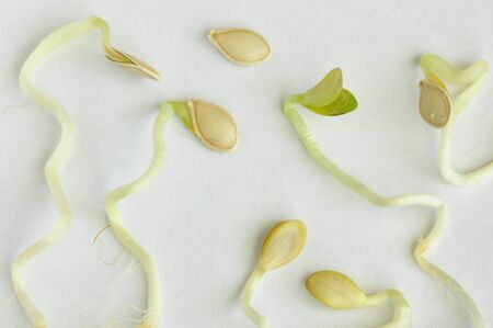 bourgeon: Sprouts and seeds.