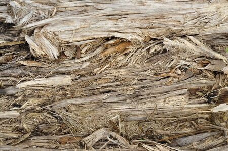 fibrous: Texture of the old loose fibrous wood.