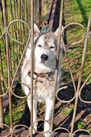 aviary: Husky in the aviary.