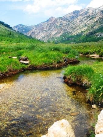 Creek in Lamoille Canyon