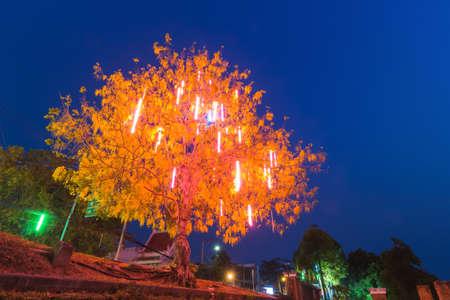 Tree Lighting at night