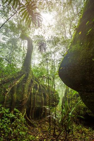 Tropical Rainforest Landscape foggy weather at Phuhinrongkla National Park Nakhon Thai District in Phitsanulok, Thailand Banco de Imagens