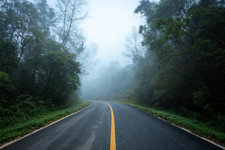 Road in with nature forest and foggy road of Rain forest Foto de archivo