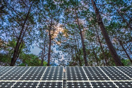 Solar panel on larch forest summer with different trees, Alternative energy concept,Clean energy,Green energy.