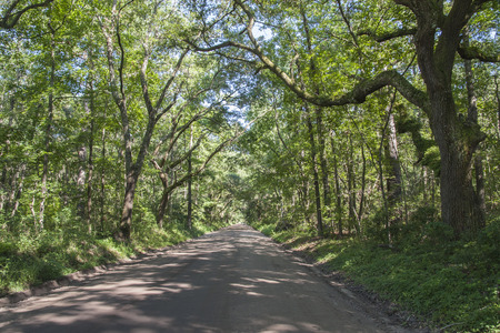 A scenic tree-lined road on Edisto Island, SC