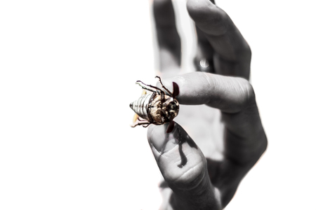 hand hold a beetle