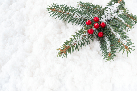 Christmas tree fir twig with red holly berries covered with snowflakes and laying on snow background.