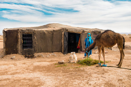Sahara, Morocco - May 10, 2017: Berber man dressed in traditional moroccan gandoura and touareg watches his camel eat alfalfa in front of his Berber tent in the moroccan Sahara desert.