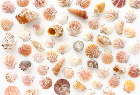 Variety of seashells on white background.