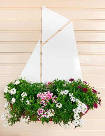 Summer flowers planted in a small sailing boat hanging on a wood panel wall with copy space. 版權商用圖片