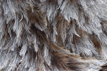 gray feathers background, gray plumage