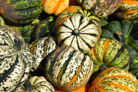 ornamental pumpkins or cucurbita on an open market, colorful pumpkins lit by autumn sun