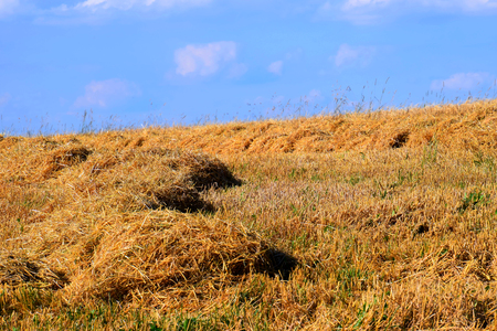 meadow with straw in summer in bavaria, golden hay on a stubble field in july