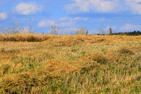 looses straw on a meadow in summer, golden hay on a stubble field in july