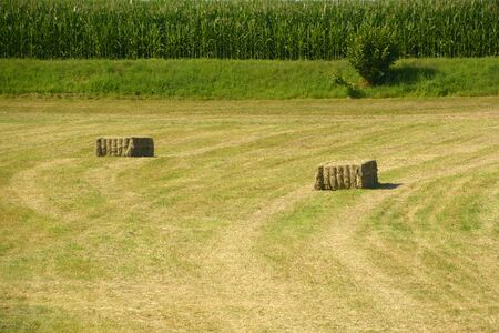 hay cuboids on a meadow in front of a green corn field as a rural backdrop, hay cuboids in bavaria