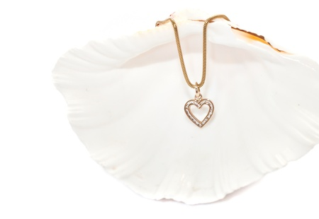 sea shell on white background with a gold chain Stock Photo - 17466114
