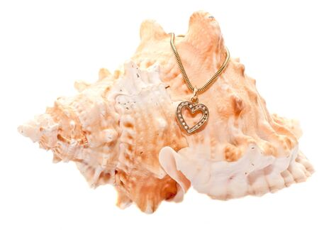 seashell with a gold chain Stock Photo - 17466118