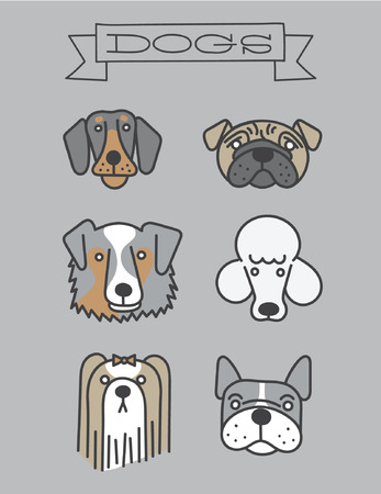 australian shepherd: Dog Faces