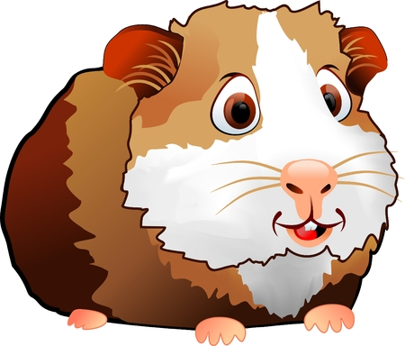 guinea pig: brown cute guinea pig