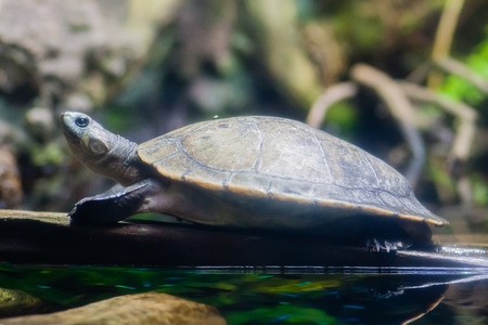 turtle resting on branch on water