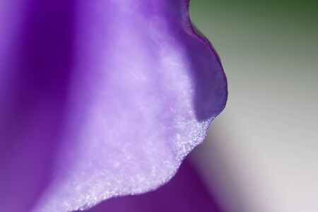 abstract curves with bokeh from flower petal
