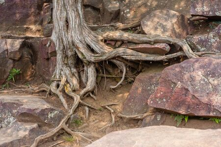roots of a tree into the ground and rocks