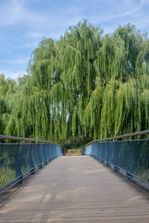 bridge pathway with trees overhang