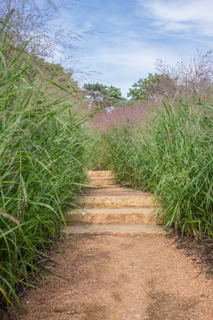 pathway stairs with tall grass