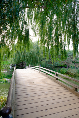 wooden bridge with trees