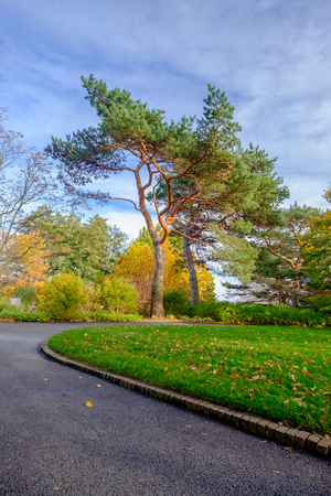 curved path with tree at park