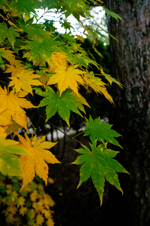 green and yellow leaves with tree in background
