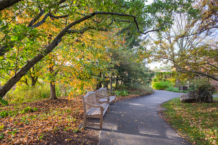 two benches by pathway in park