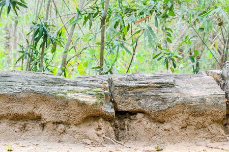 Petrified wood in the Phu Kradung formation at Phu Faek Forest ParkKalasin ProvinceThailand. Stock Photo