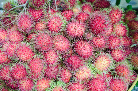 A pile of fresh rambutans from the garden prepared for selling to the tourist in Jantaburi province,Thailand.it is the native fruit of Southeast Asia.