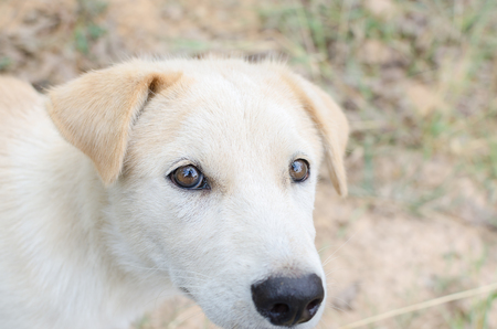 Head shot of a young mixed breed dog looking up.