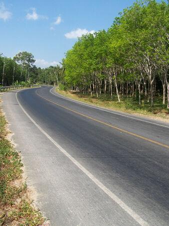 southern thailand:  Road through the tree Stock Photo