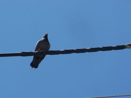 natureal: bird on the cable