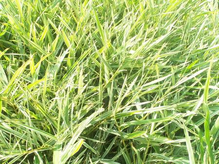 natureal: bamb� piccolo