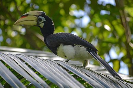 Young hornbill rest
