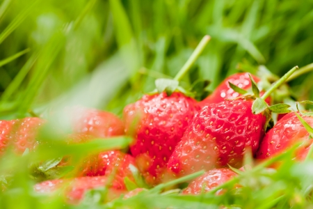 pollution free: Strawberries, green food Stock Photo