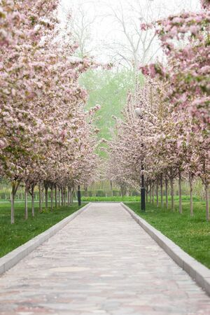 flower garden path: Large flowers are opening in the park in spring