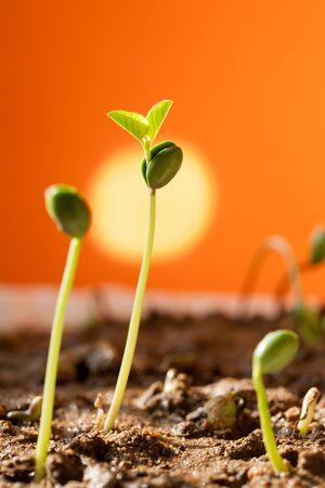 Plant growth, indicates that vigorous  Stock Photo - 17075685