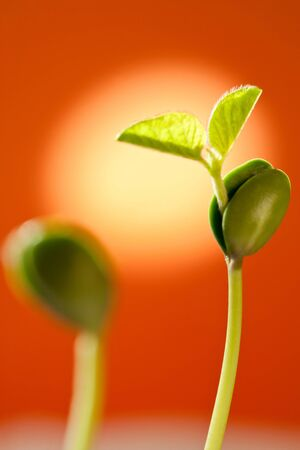 Plant growth, indicates that vigorous Stock Photo - 17075667