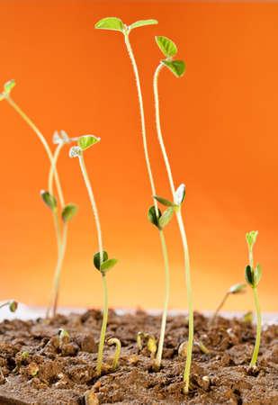 Plant growth, indicates that vigorous Stock Photo - 17075722