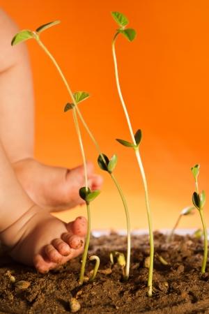 Plant growth, indicates that vigorous Stock Photo - 17075280
