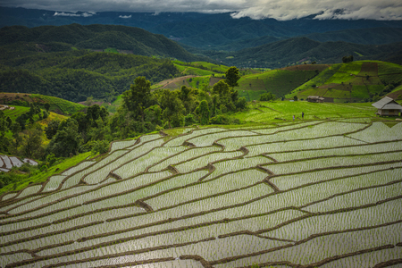 Rice terraces,Rice field on the mountain,Natural retreats,The life of the hilltribe