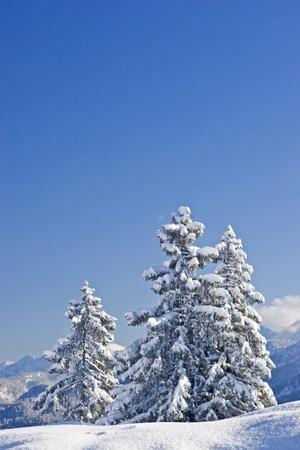 deep powder snow: Winterlandscape in Bavaria Stock Photo