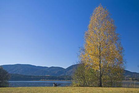 autumn colouring: Staffelsee, Birke  Stock Photo