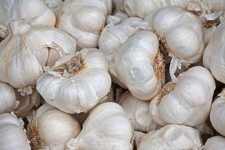 garlics: background garlics